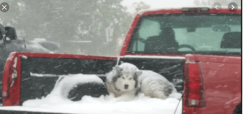truck bed dog bed