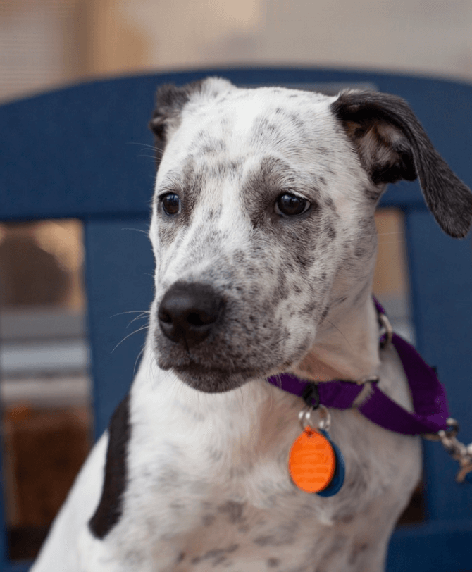 Family returns 4-month-old puppy after DNA test showed him to be 25% pit bull • Pet Rescue Report