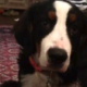 Dog died at boarding facility