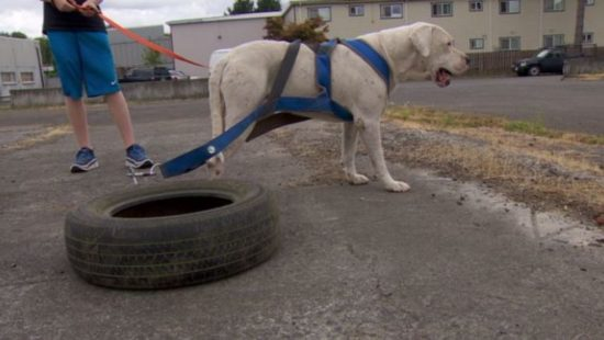 Owner claims 'exercise' routine after video of dog