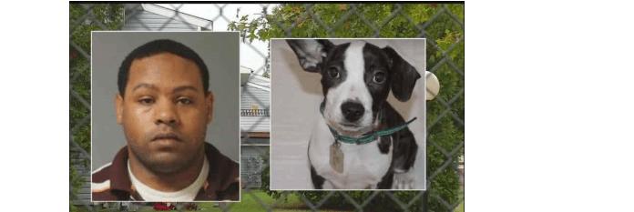 Maximum sentence for dog killer