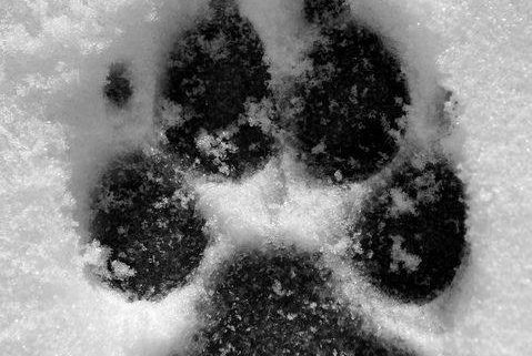 Admin of Sauk Rapids animal shelter resigns after dogs left
