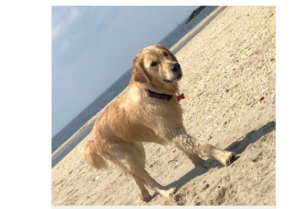 Dog vanished while on boat outing with family