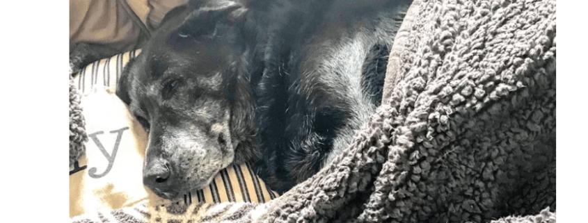 Elderly dog found with deceased guardian