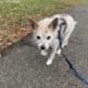 Elderly dog homeless after death of owner