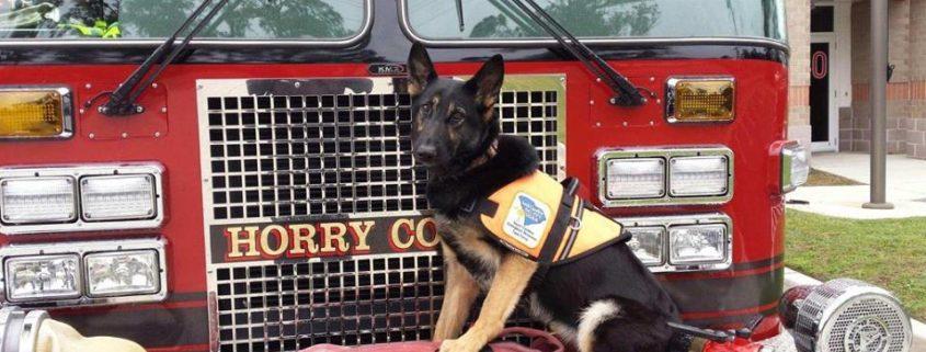 Firefighter's stolen dog