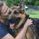 German shepherds released for adoption