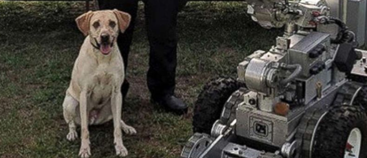 Police K9 died after being left in car for hours