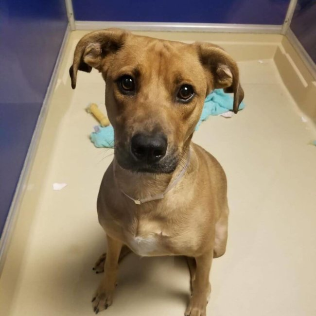 Young and friendly pup at Miami shelter slated to die tomorrow