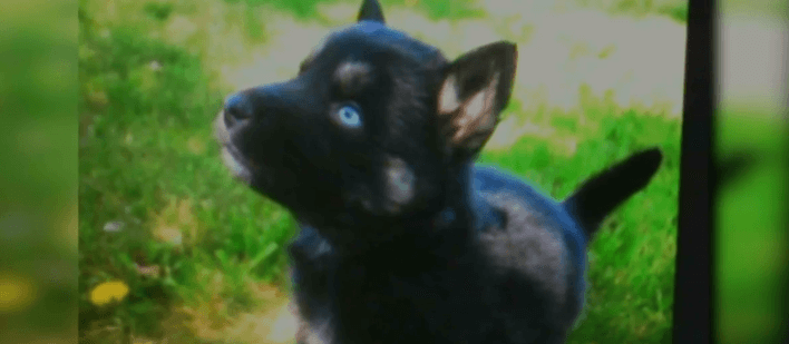 Hispanic men stole man's puppy