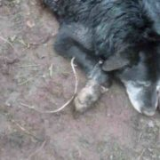 Animal Control officer discovers dog buried alive up to ...