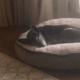 Luke Bryan's elderly dog has passed away