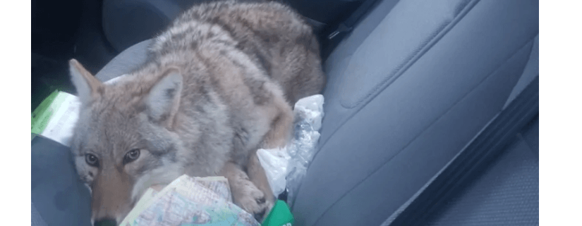 Man rescued 'dog' after striking it with his car