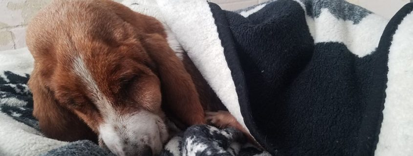 Neglected dog gets compassionate good-bye