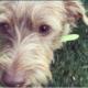 Dog missing after burglary