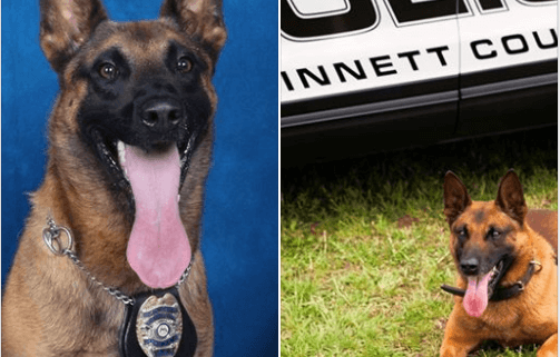 Heat suspected in death of police K9
