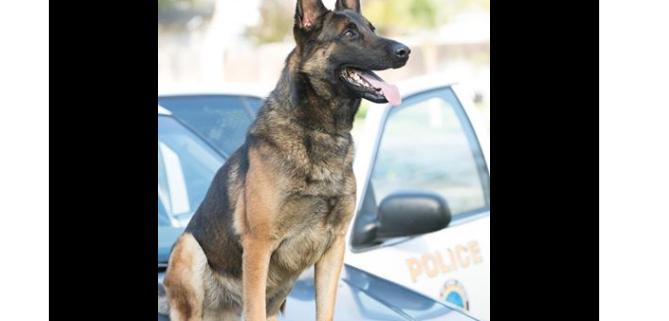 Police K9 found dead in handler's patrol car