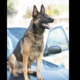 Police K9 found dead in handler's patrol car
