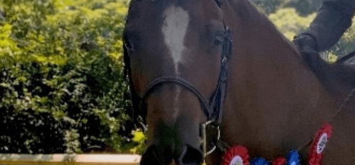 Pony injured in violent attack