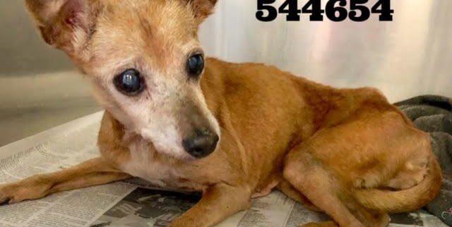 Elderly 15 yr old dog in need
