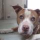 Surrendered senior dog cries for family who left her