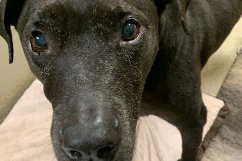 Senior dog surrendered after lifetime with family