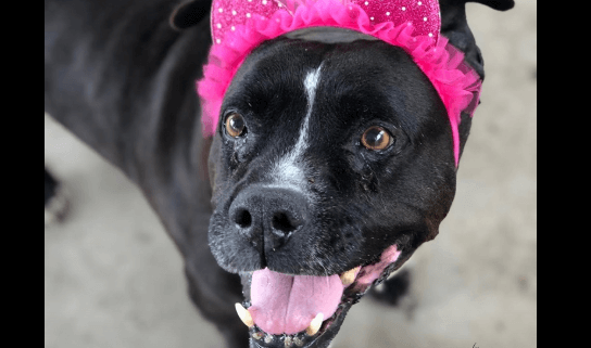 Senior dog's person died