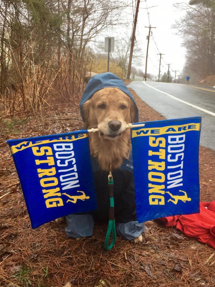 Rainy Day Dog Rescue