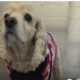 Surrendered senior dog