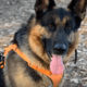 Speeding UPS driver killed family's German shepherd