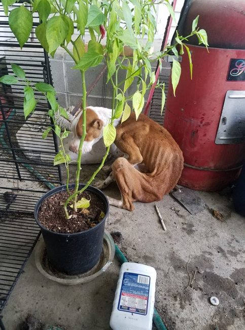 Update on emaciated Willow found starving at vacant house • Pet