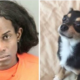 Woman who threw dog from parking garage found guilty