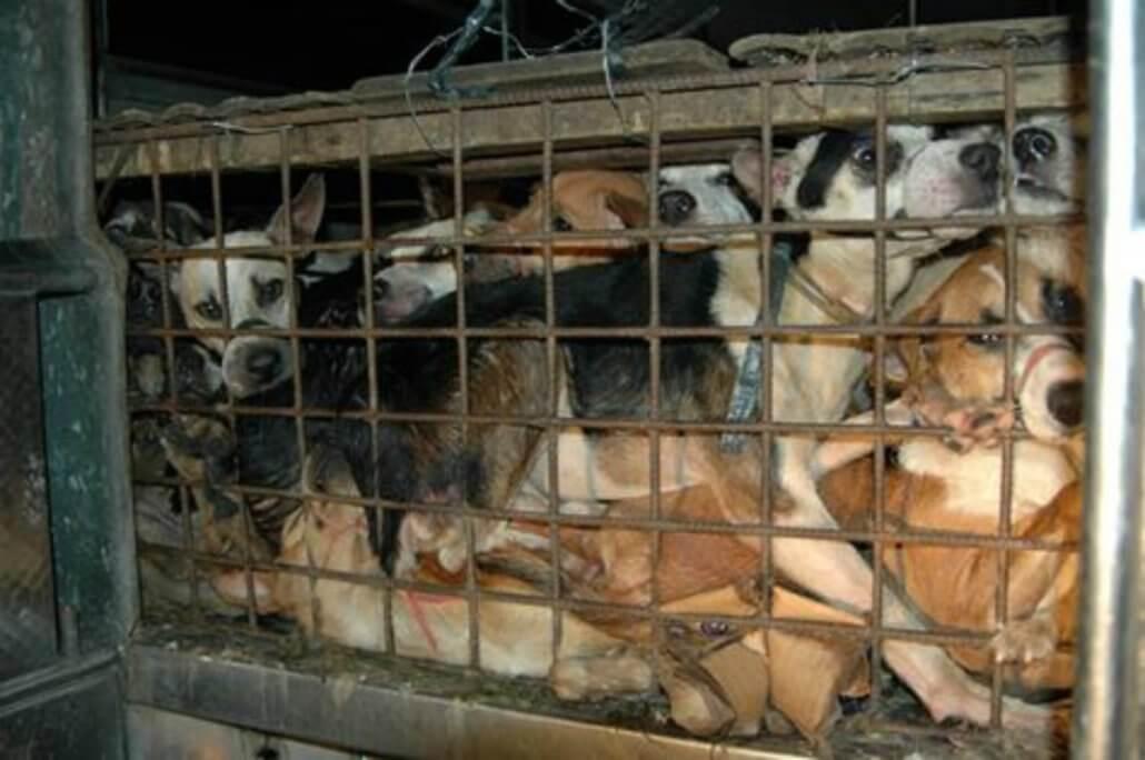 Yulin dog meat festival brutal reminder of China's crime and