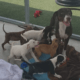dog and puppies abandoned in a crate