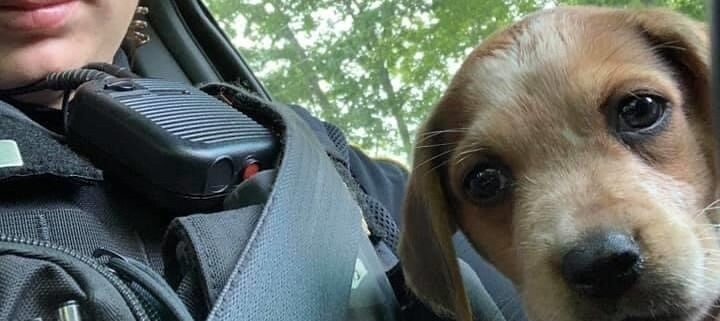 abandoned puppy gets home with police officer