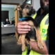 Puppy rescued from mounds of trash