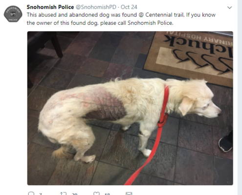 Abused and abandoned dog found on hiking trail