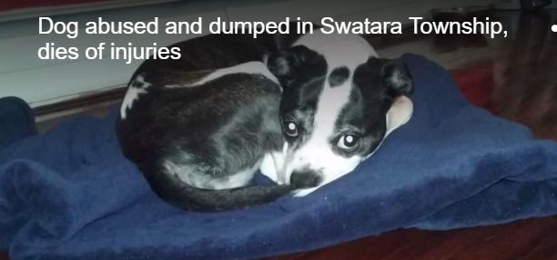 Family dog stolen, tortured and dumped