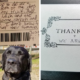 Adorable canine thieves outed by postal carrier