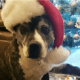 After 8 years, shelter dog spent Christmas in a home