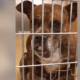 Death row dog, ailing and out of time