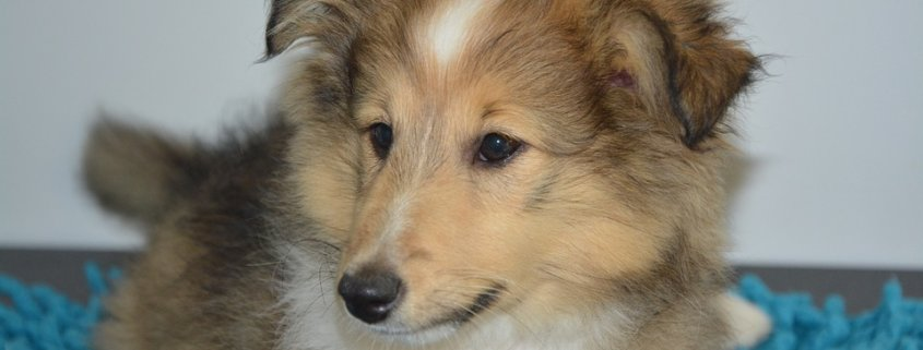 Ailing puppy died after being abandoned in bathroom