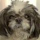 Ailing senior dog surrendered