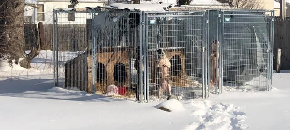 ANimal control removed dogs