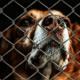 Animal shelter announces closure
