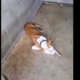 Animal shelter under investigation
