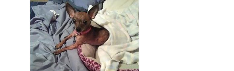arrested - dog found in trash