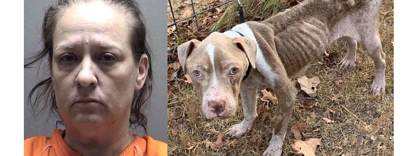 Woman arrested for neglect of dogs