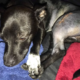 Authorities search for people who hit dog with car