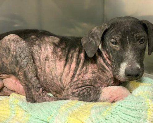 Baby with skin condition needs help
